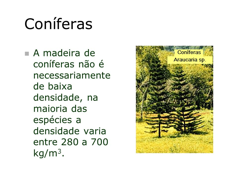 ConíferasA madeira de coníferas não é necessariamente de baixa densidade, na maioria das espécies a densidade varia entre 280 a 700 kg/m3.