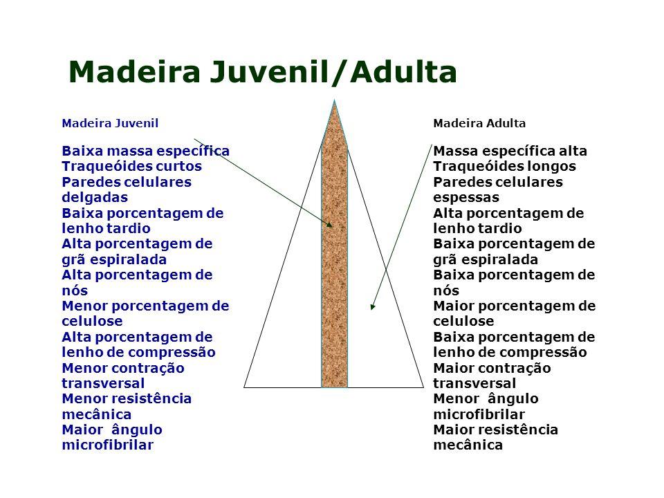 Madeira Juvenil/Adulta