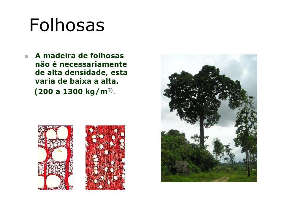 Folhosas A madeira de folhosas não é necessariamente de alta densidade, esta varia de baixa a alta.