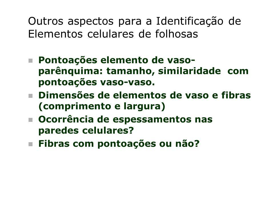 Outros aspectos para a Identificação de Elementos celulares de folhosas