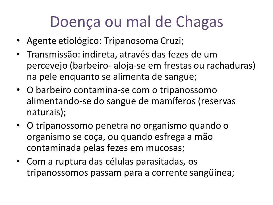Doença ou mal de Chagas Agente etiológico: Tripanosoma Cruzi;