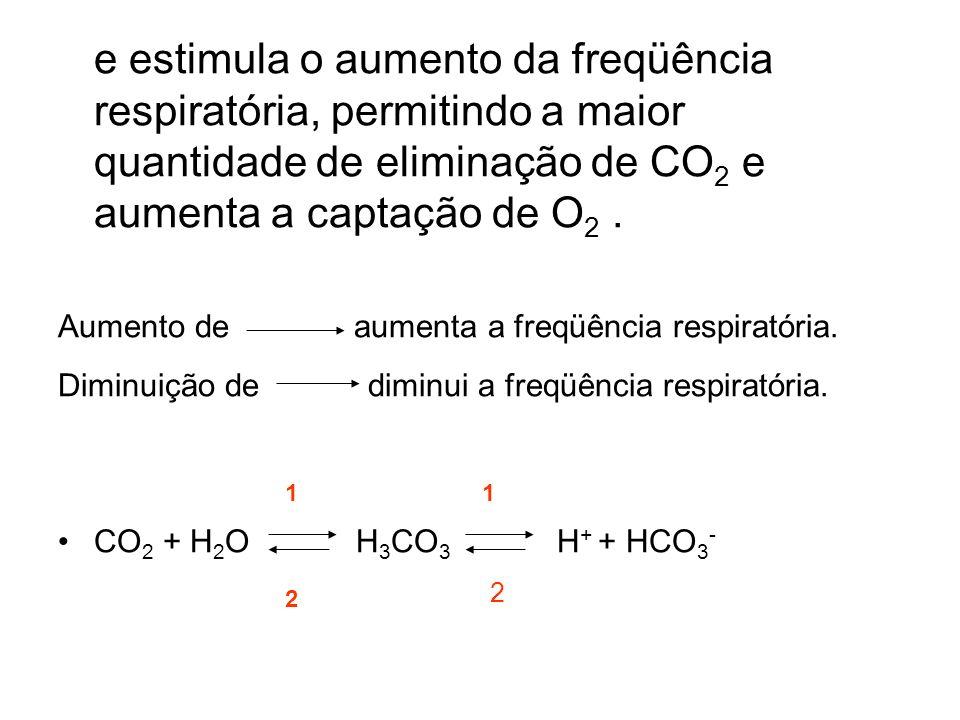 e estimula o aumento da freqüência respiratória, permitindo a maior quantidade de eliminação de CO2 e aumenta a captação de O2 .