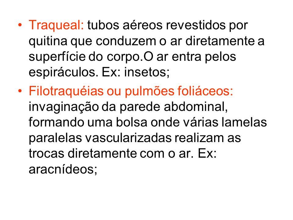 Traqueal: tubos aéreos revestidos por quitina que conduzem o ar diretamente a superfície do corpo.O ar entra pelos espiráculos. Ex: insetos;