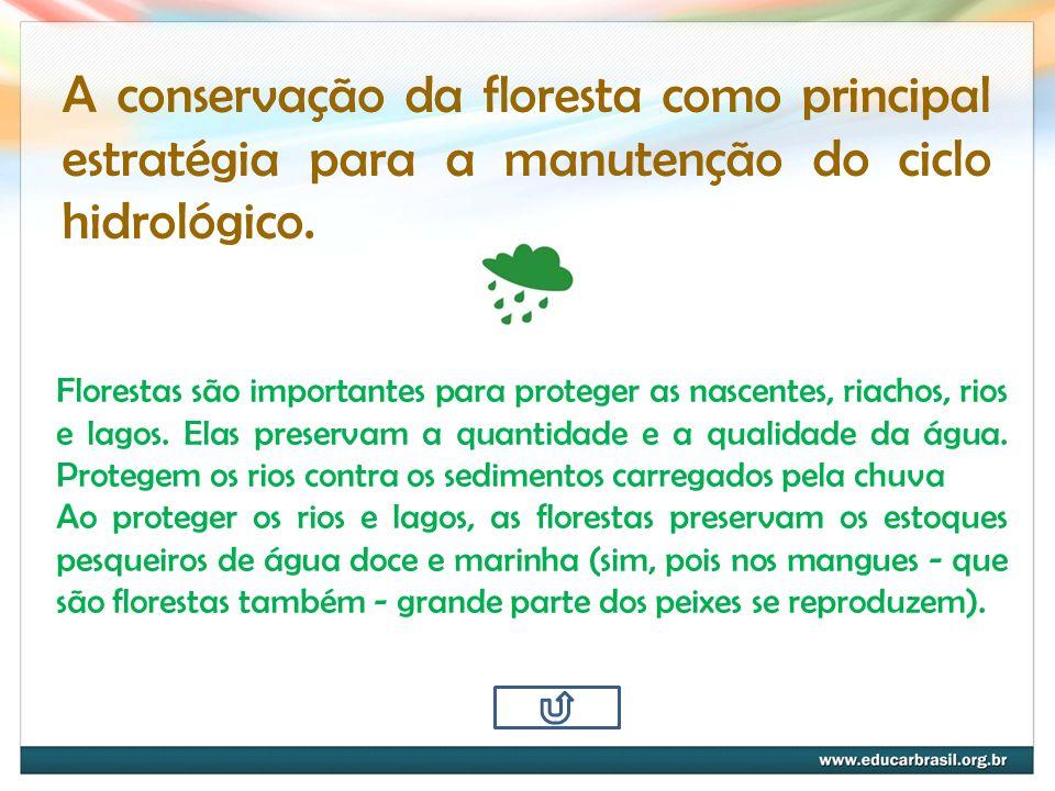 A conservação da floresta como principal estratégia para a manutenção do ciclo hidrológico.
