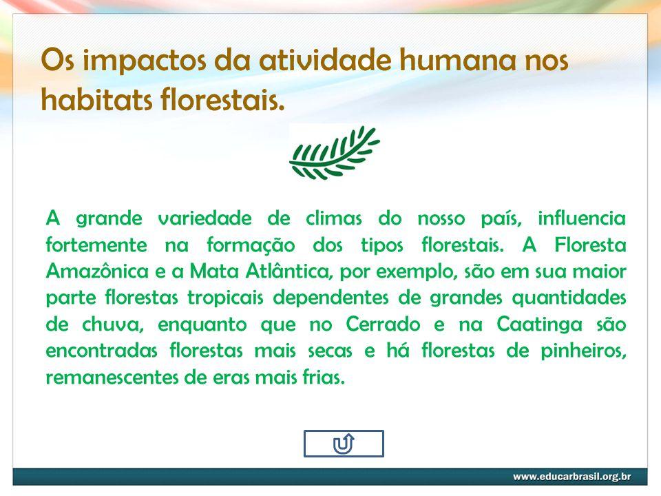 Os impactos da atividade humana nos habitats florestais.