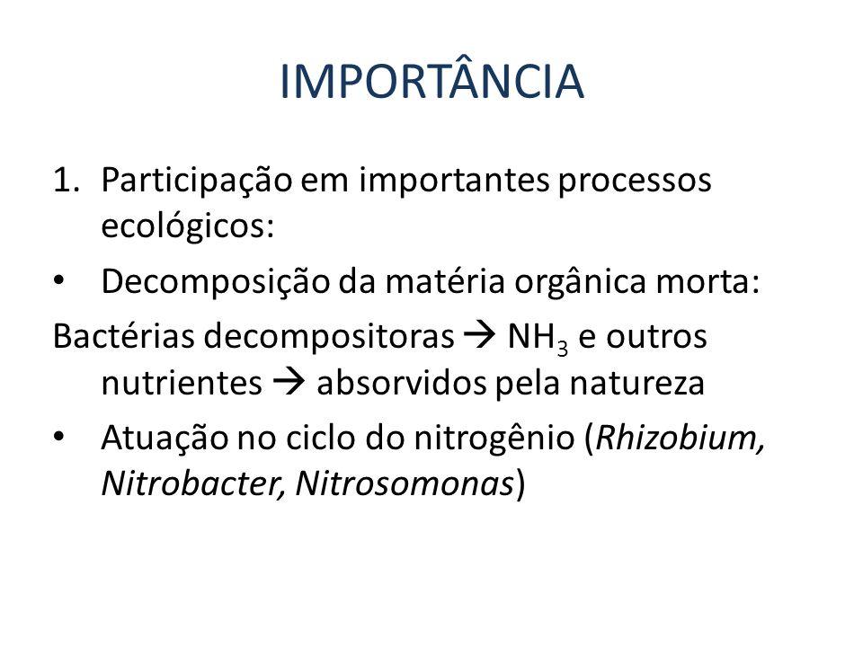 IMPORTÂNCIA Participação em importantes processos ecológicos: