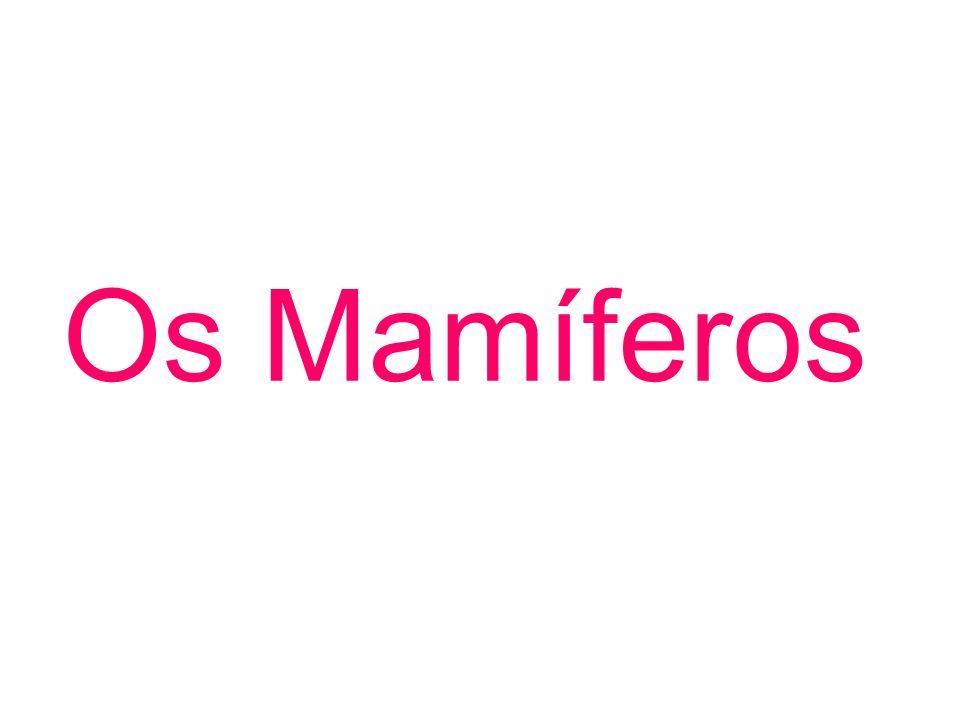 Os Mamíferos