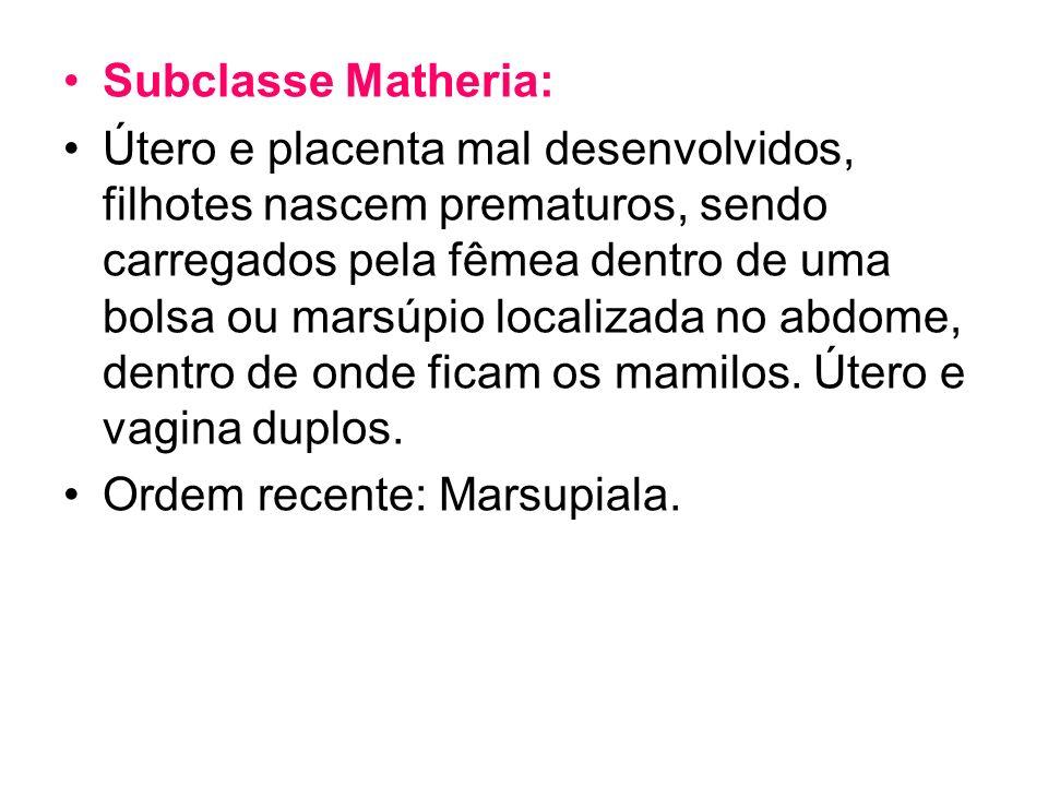 Subclasse Matheria: