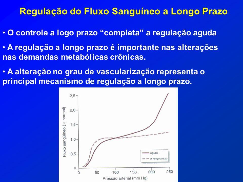 Regulação do Fluxo Sanguíneo a Longo Prazo
