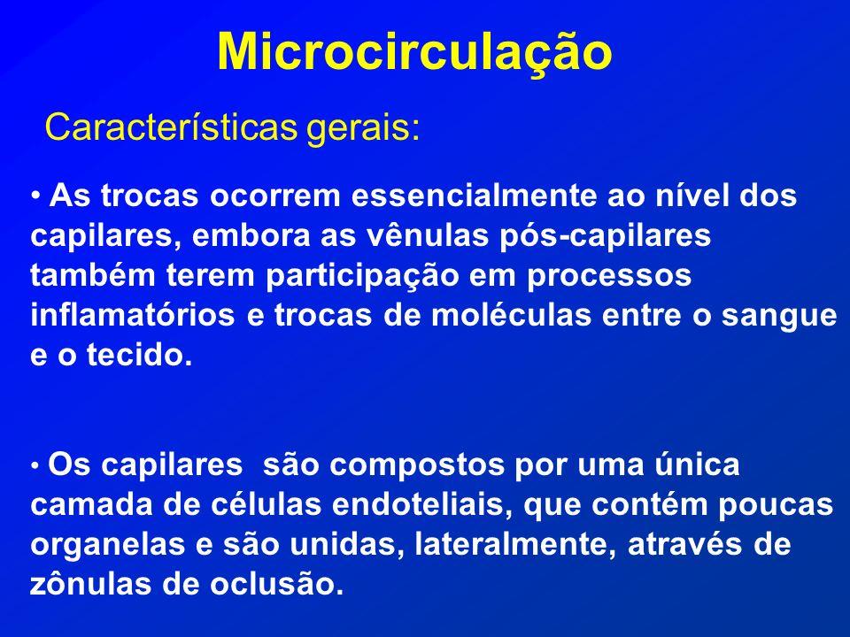 Microcirculação Características gerais: