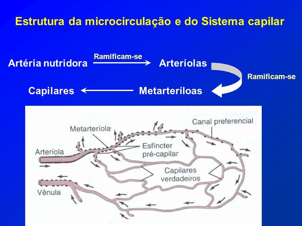Estrutura da microcirculação e do Sistema capilar