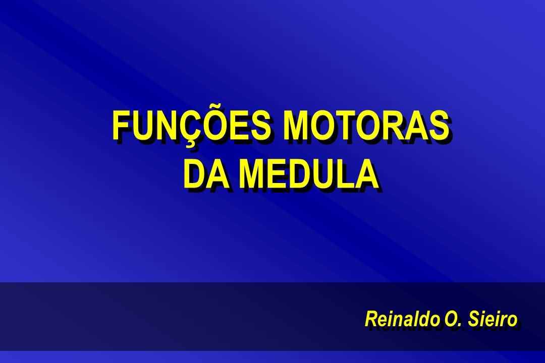 FUNÇÕES MOTORAS DA MEDULA