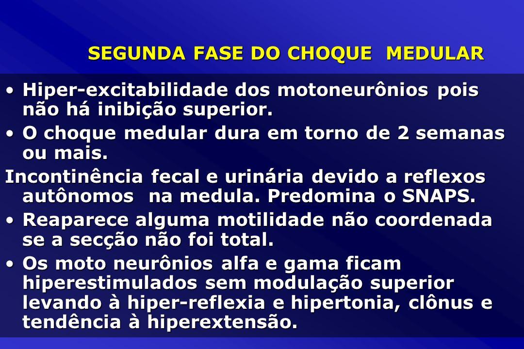 SEGUNDA FASE DO CHOQUE MEDULAR