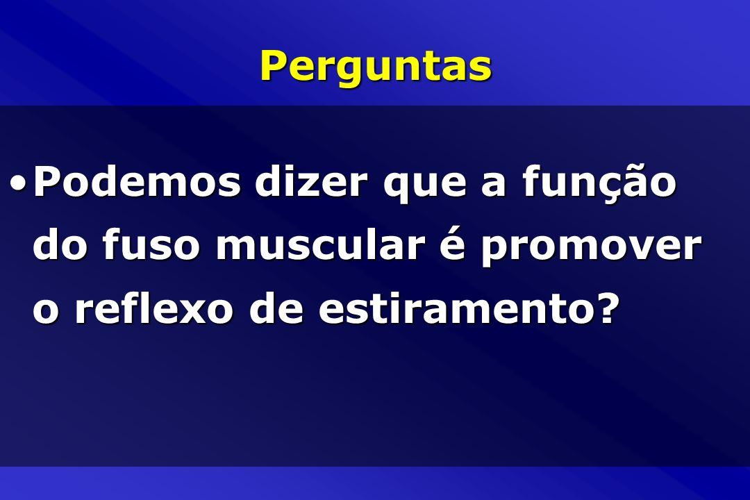 Perguntas Podemos dizer que a função do fuso muscular é promover o reflexo de estiramento