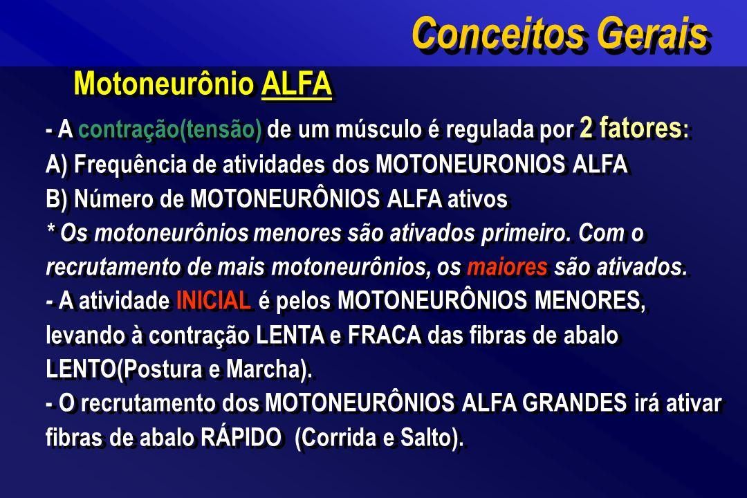 Conceitos Gerais Motoneurônio ALFA