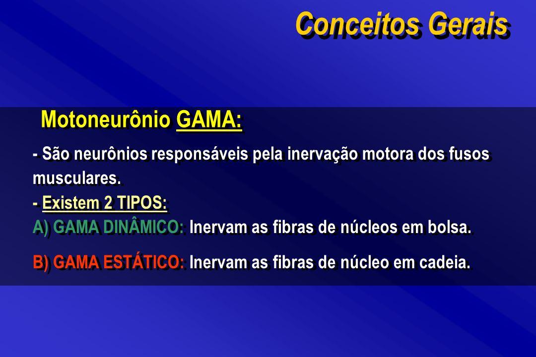Conceitos Gerais Motoneurônio GAMA: