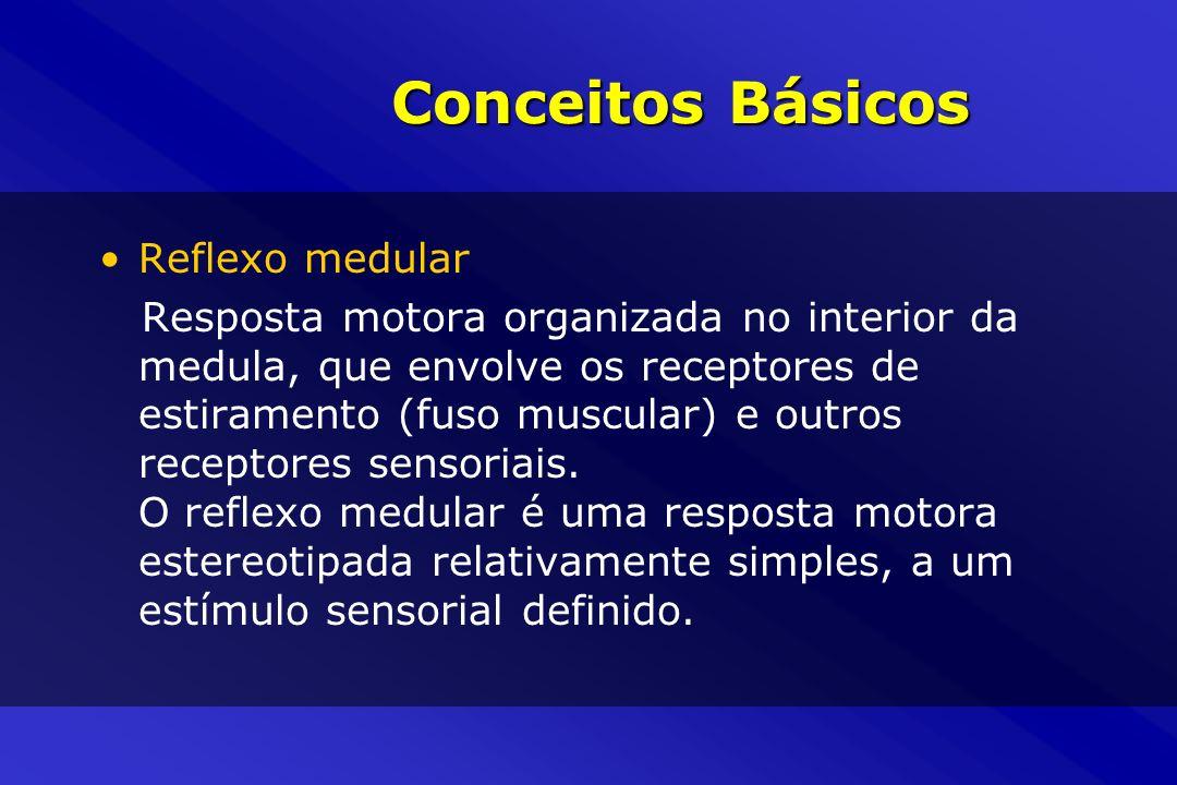 Conceitos Básicos Reflexo medular