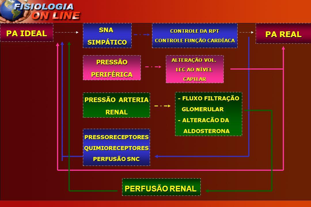 PA IDEAL PA REAL PERFUSÃO RENAL SNA SIMPÁTICO PRESSÃO PERIFÉRICA