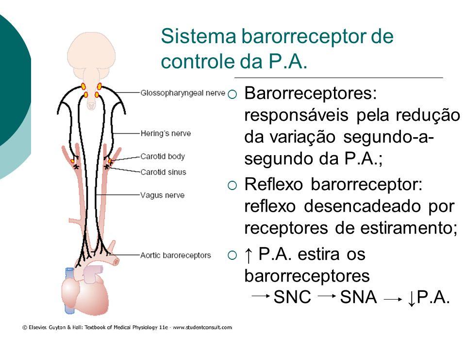 Sistema barorreceptor de controle da P.A.
