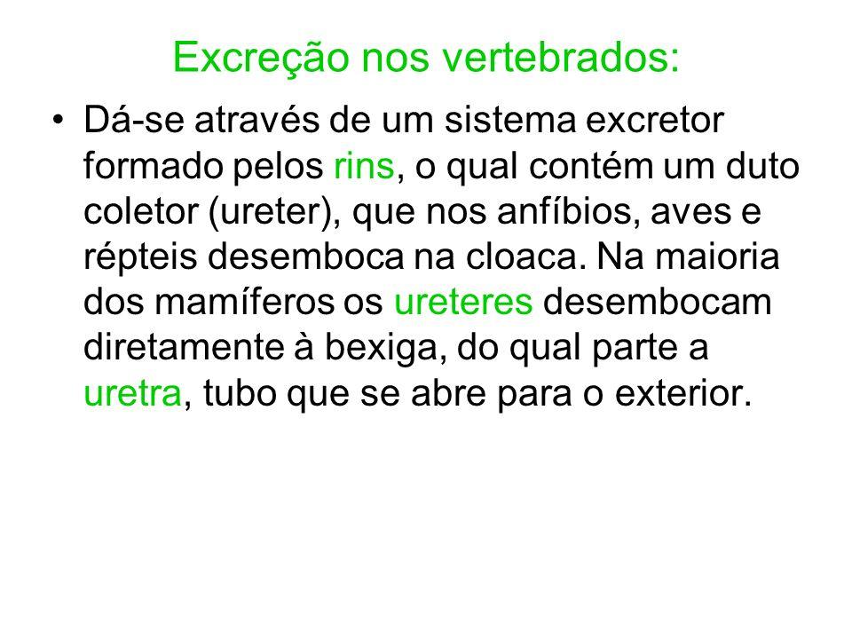 Excreção nos vertebrados: