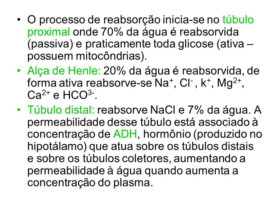 O processo de reabsorção inicia-se no túbulo proximal onde 70% da água é reabsorvida (passiva) e praticamente toda glicose (ativa – possuem mitocôndrias).