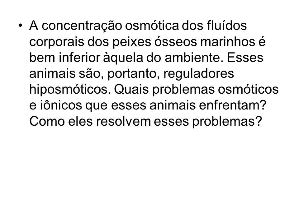 A concentração osmótica dos fluídos corporais dos peixes ósseos marinhos é bem inferior àquela do ambiente.