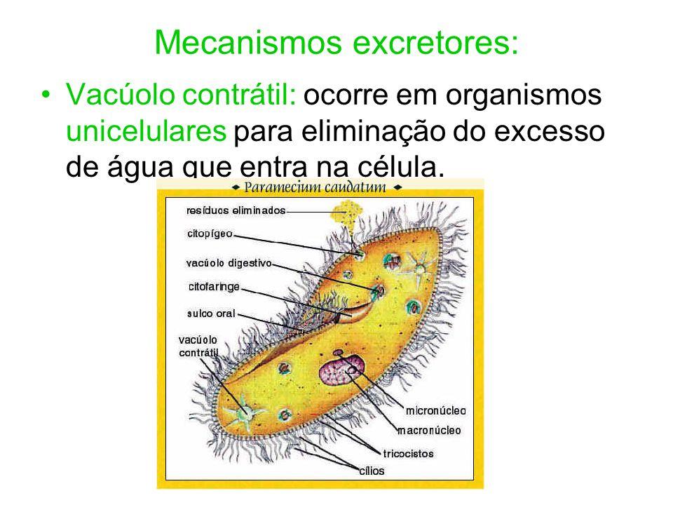 Mecanismos excretores: