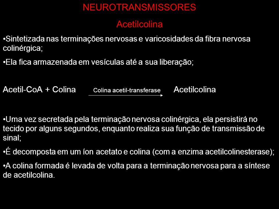 NEUROTRANSMISSORES Acetilcolina
