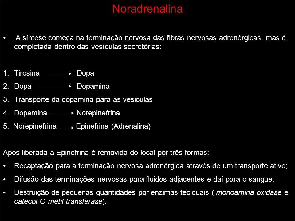 Noradrenalina A síntese começa na terminação nervosa das fibras nervosas adrenérgicas, mas é completada dentro das vesículas secretórias: