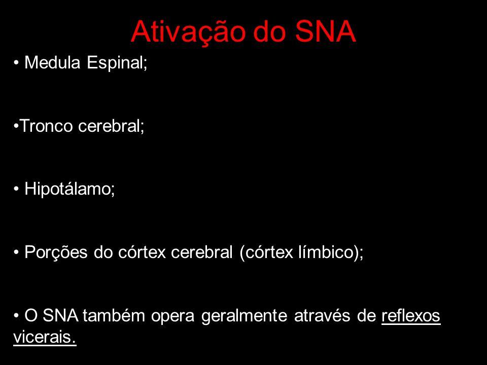 Ativação do SNA Medula Espinal; Tronco cerebral; Hipotálamo;