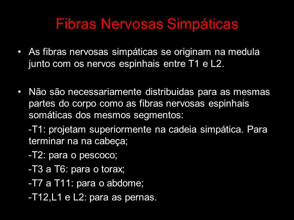 Fibras Nervosas Simpáticas