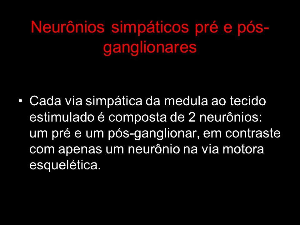 Neurônios simpáticos pré e pós-ganglionares