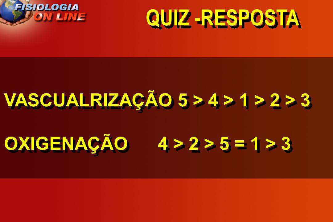 QUIZ -RESPOSTA VASCUALRIZAÇÃO 5 > 4 > 1 > 2 > 3