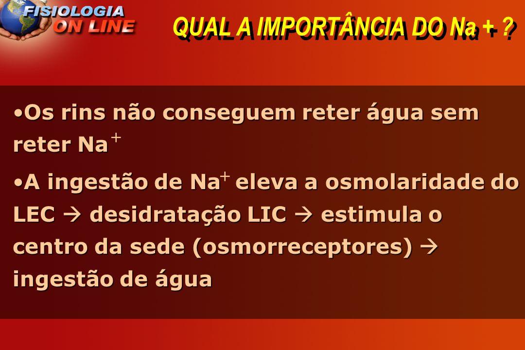 QUAL A IMPORTÂNCIA DO Na +