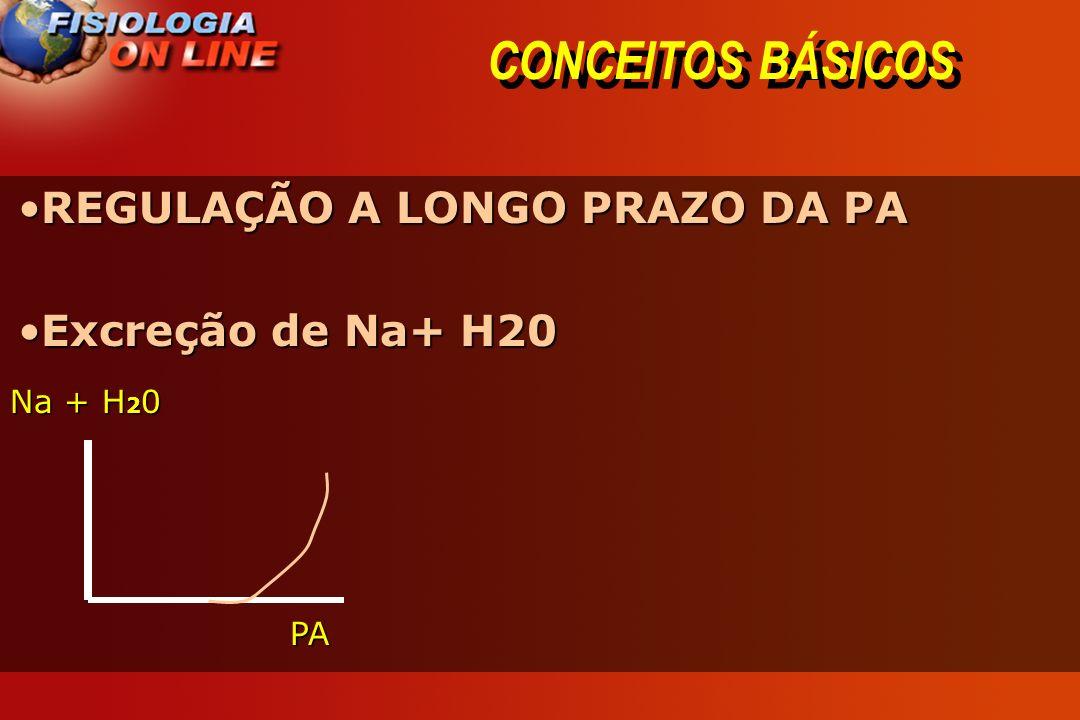 CONCEITOS BÁSICOS REGULAÇÃO A LONGO PRAZO DA PA Excreção de Na+ H20
