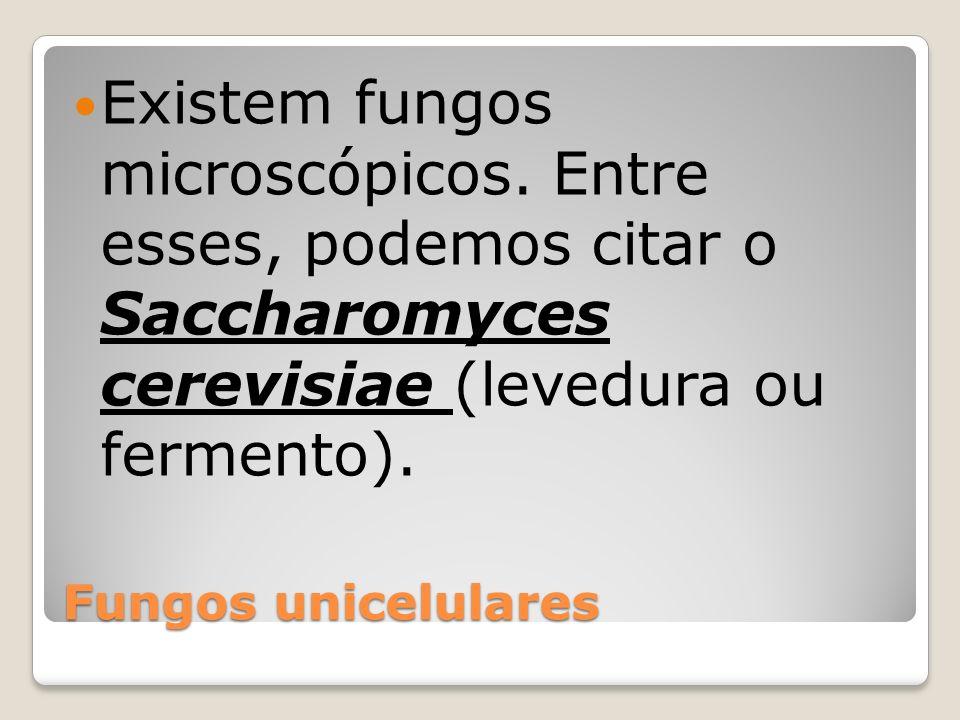 Existem fungos microscópicos