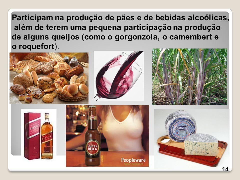Participam na produção de pães e de bebidas alcoólicas,