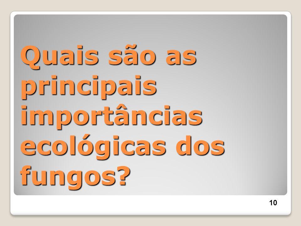 Quais são as principais importâncias ecológicas dos fungos