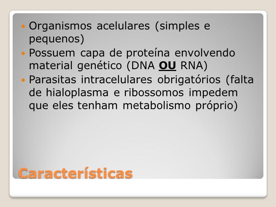 Características Organismos acelulares (simples e pequenos)