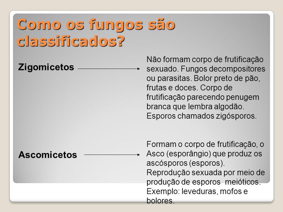 Como os fungos são classificados