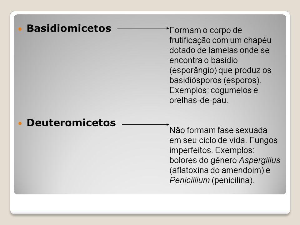 Basidiomicetos Deuteromicetos