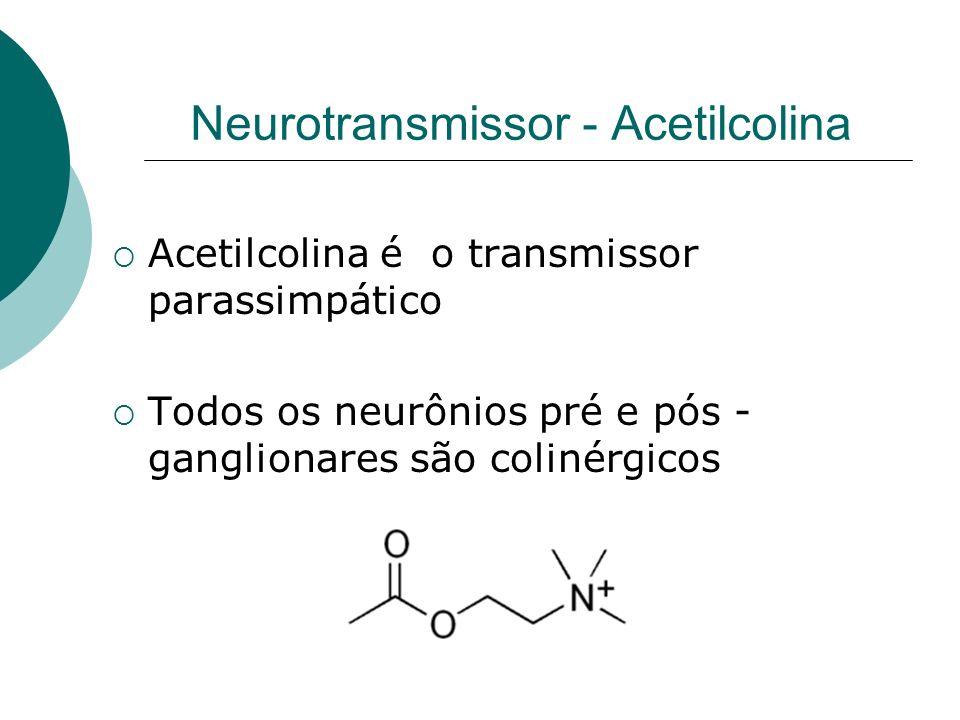 Neurotransmissor - Acetilcolina