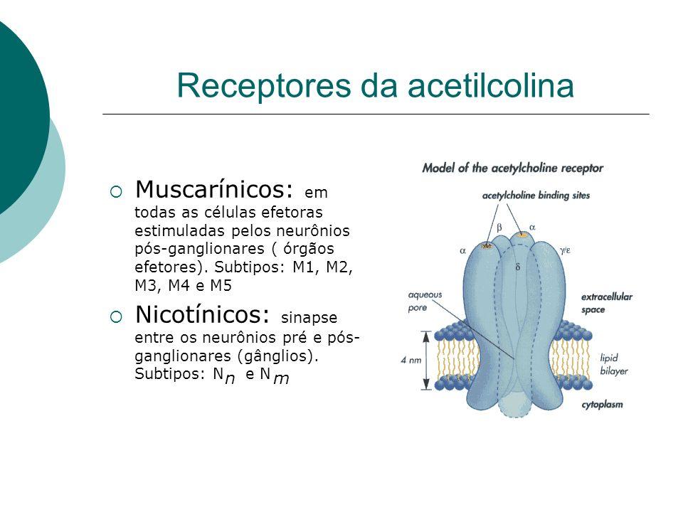 Receptores da acetilcolina