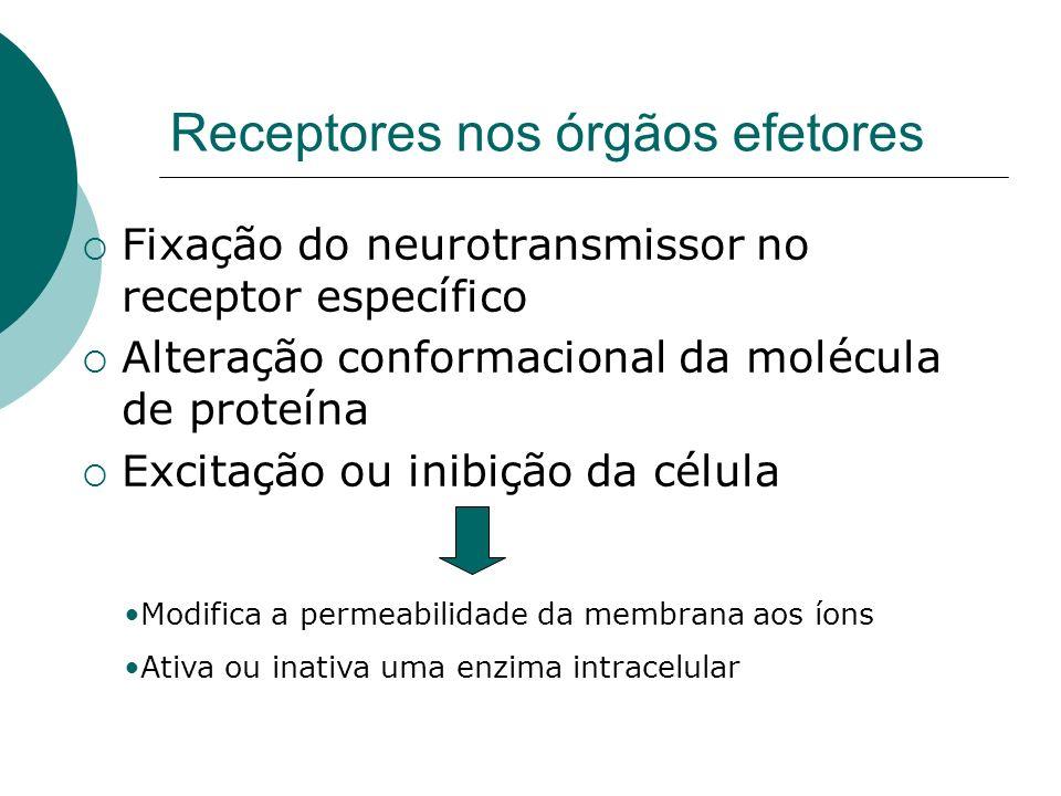 Receptores nos órgãos efetores