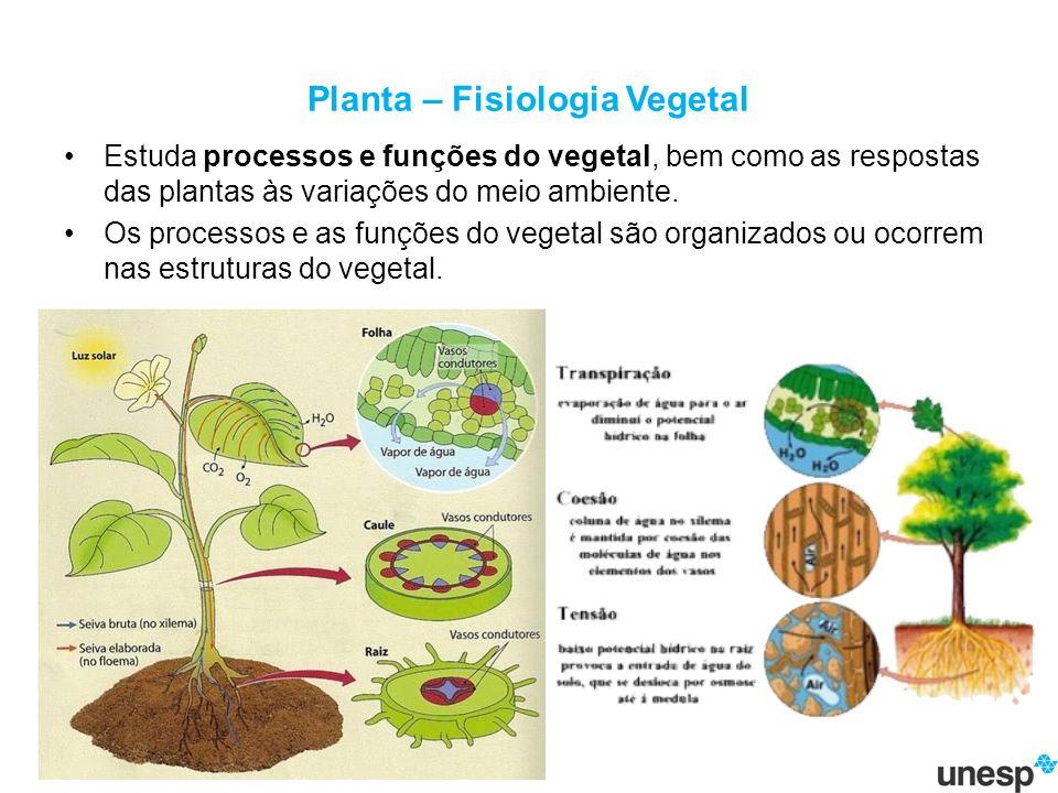 Planta – Fisiologia Vegetal