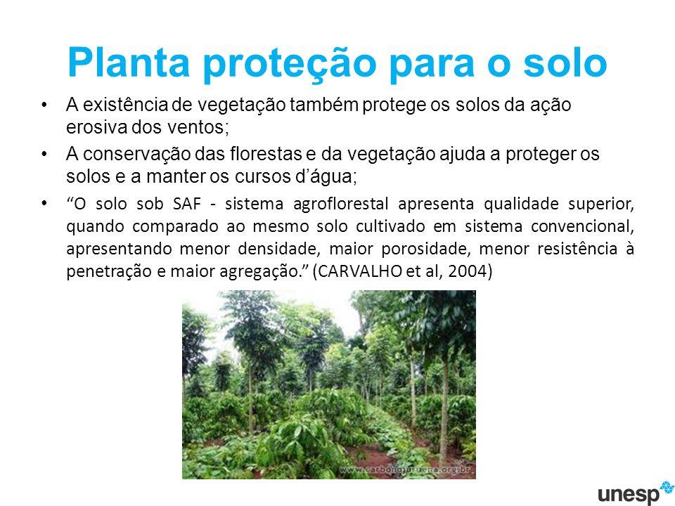 Planta proteção para o solo