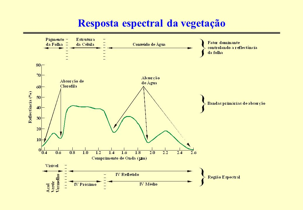 Resposta espectral da vegetação