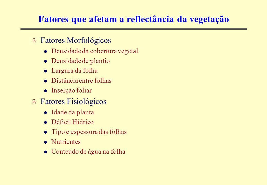 Fatores que afetam a reflectância da vegetação