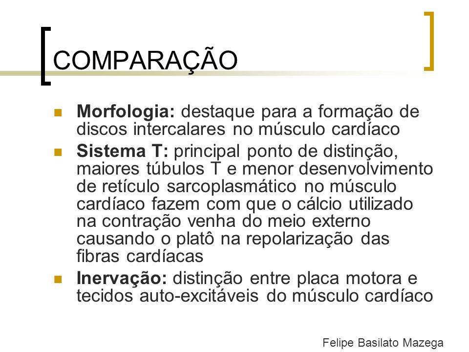 COMPARAÇÃO Morfologia: destaque para a formação de discos intercalares no músculo cardíaco.