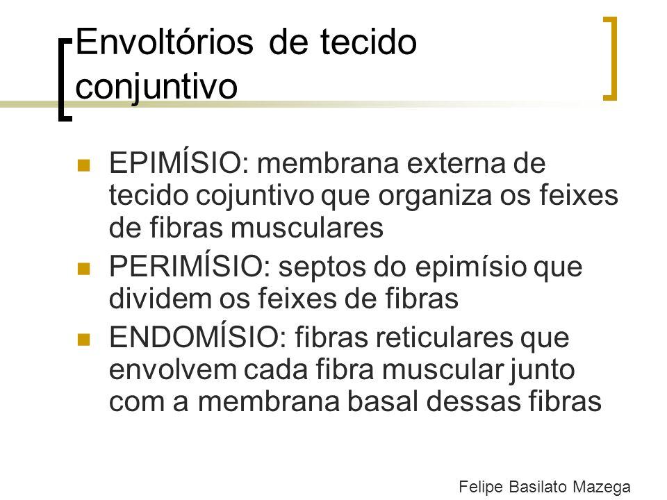 Envoltórios de tecido conjuntivo